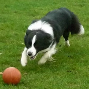 Alfie with ball