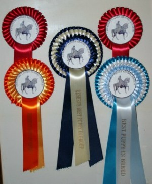 Evie's Rosettes from Coventry Ladies Kennel Premier Open Show