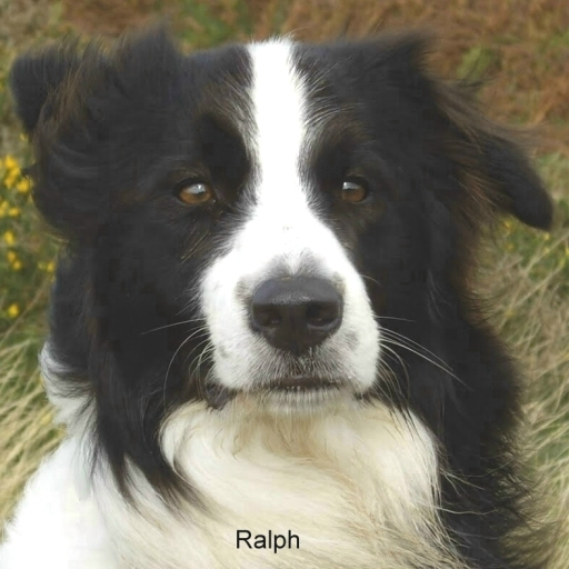 Ralph (Jupavia Magic Dream)